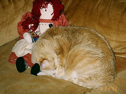 Picture of Teq the ginger cat sleeping on the couch next to a rag doll.