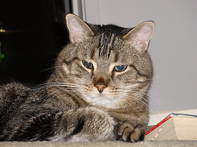 Picture of Toby the Tabby cat lying next to a book.
