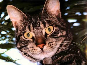 Picture of the cat, Gijs, in a tree