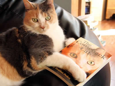 Photo of Cleo holding a copy of her book, The Comeback Cat
