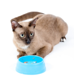 Brown cat with empty bowl