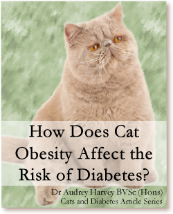Cats and Diabetes Article Cover - How Does Cat Obesity Affect the Risk of Diabetes