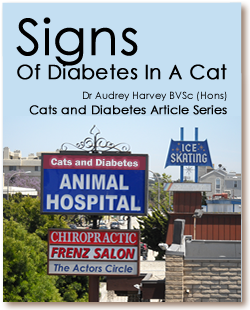 Cats and Diabetes Article Cover - Signs of Diabetes in a Cat
