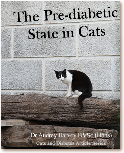 Cats and Diabetes Article Cover - The Pre-diabetic State in Cats