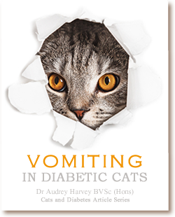 Cats and Diabetes Article Cover - Vomiting in Diabetic Cats