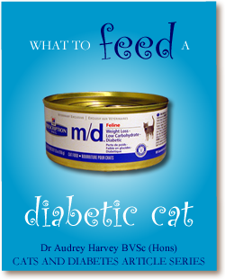 Cats and Diabetes Article Cover - What to Feed a Diabetic Cat